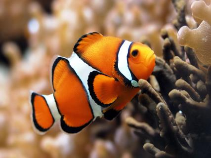 Travel Guide For Abyss Marine Fish Aquarium Goa Tour Packages