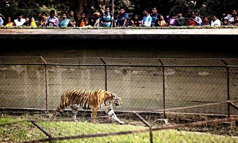 Book a Tour and Visit Alipore Zoological Gardens