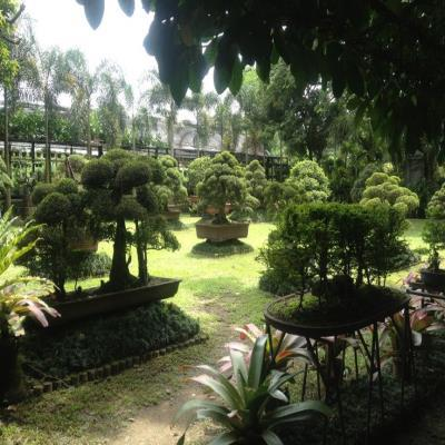 UP Bonsai Garden | Quezon City - Book Tour Packages From Trusted ...